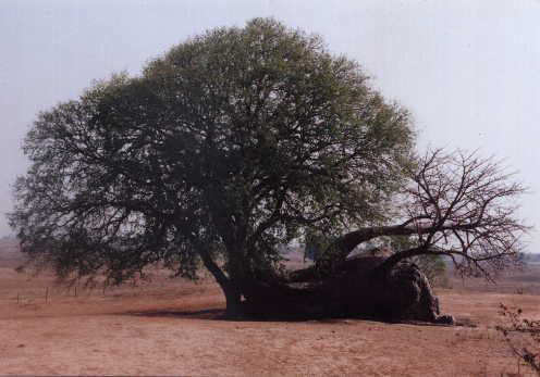 Ng'ombe Ilede - The Sleeping Cow
