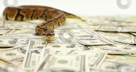 Image result for girl vomiting money